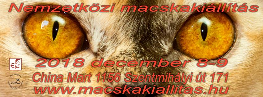 2018 december 8-9-én nagyszabású nemzetközi macskakiállítás a China Martban. 15 ország kiállítóinak 300 cicáját csodálhatod mef ezen a hétvégén. Bővebb infók a www.macskakiallitas.hu weboldalon
