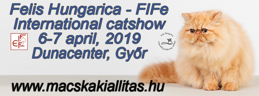 International catshow 2019 april 6 7 gyor dunacenter