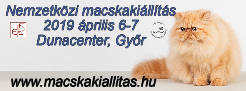 Nemzetközi macskakiállítás 2019 április 6-7 Győr, Dunacenter