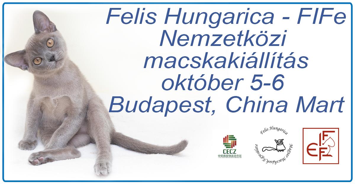 Nemzetközi macskakiállítás 2019 október 5-6 Budapest, China Mart